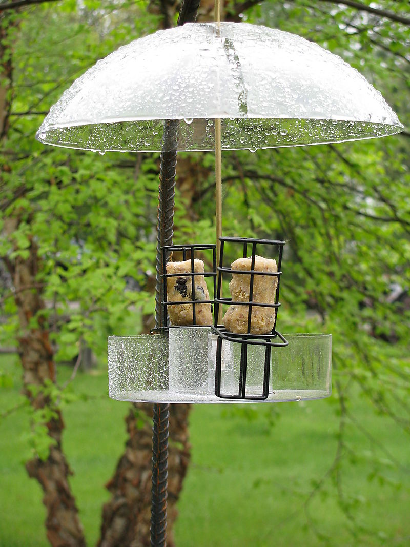 Suet and mealworm feeder