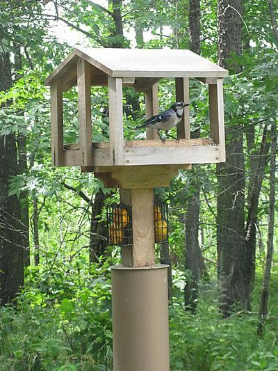 Out my kitchen window birdfeeder