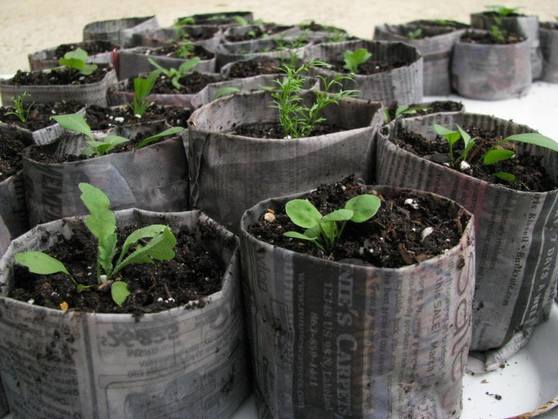 Newspaper seed pot