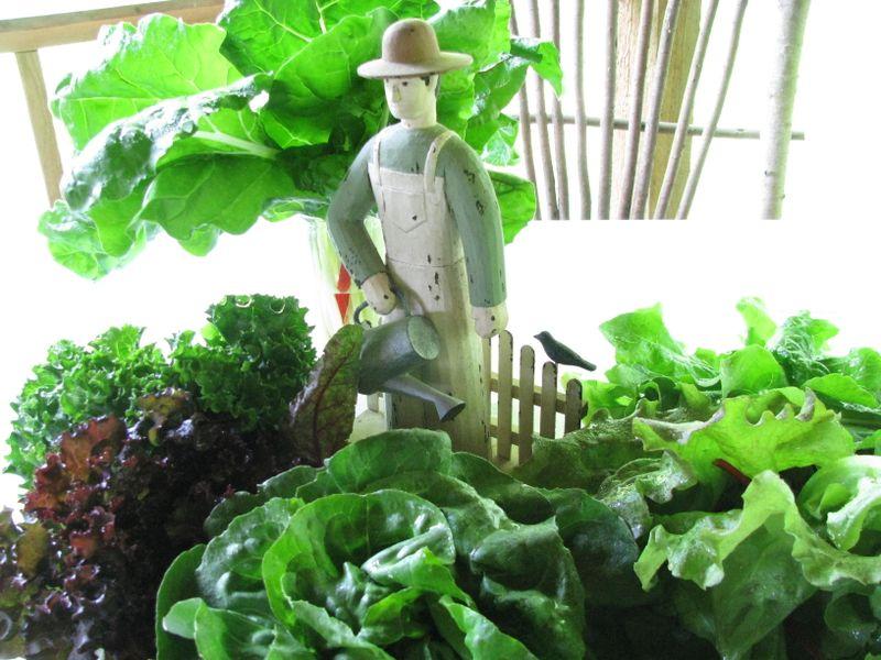 Farmer's market leafy greens