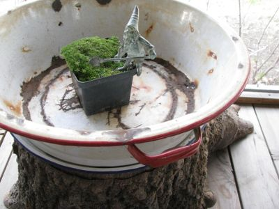 Gnome habitat preplanting