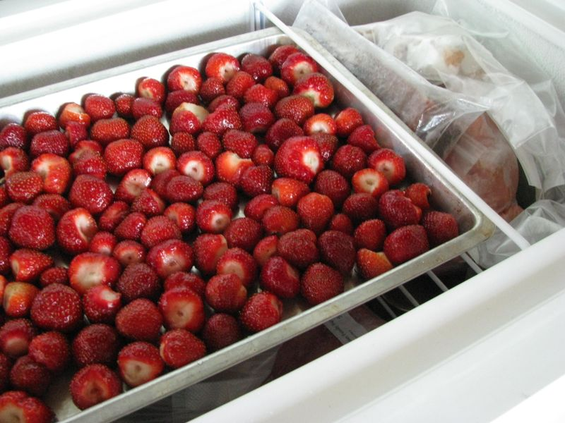 Freezing berries on tray