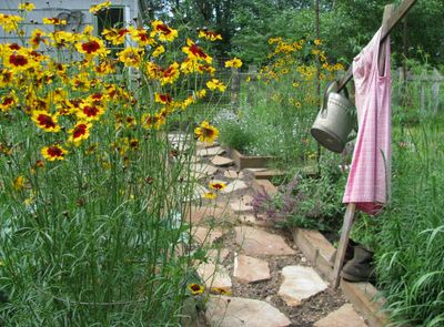 Plains coreopsis garden patch