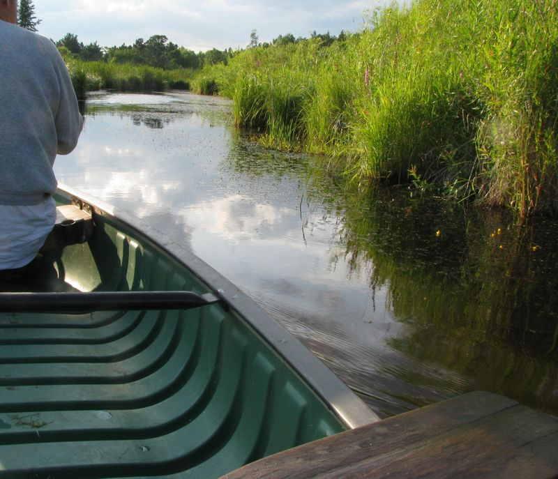 Canoeing in wetlands