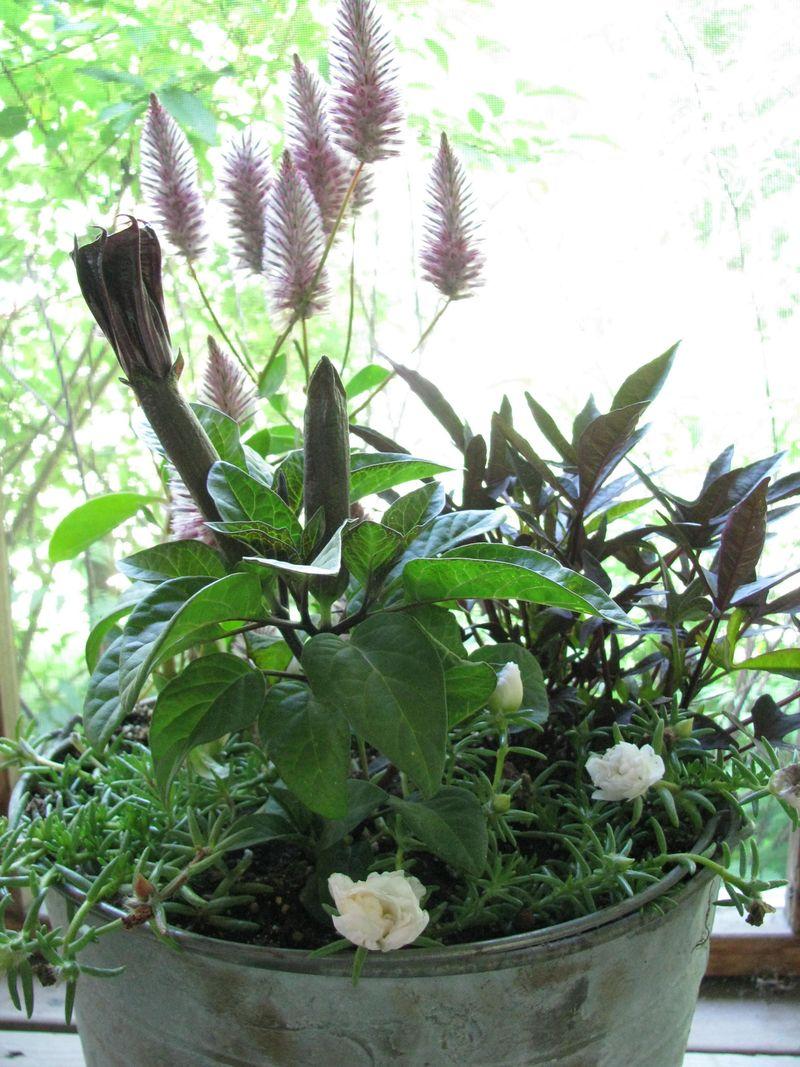 Sandy's plants