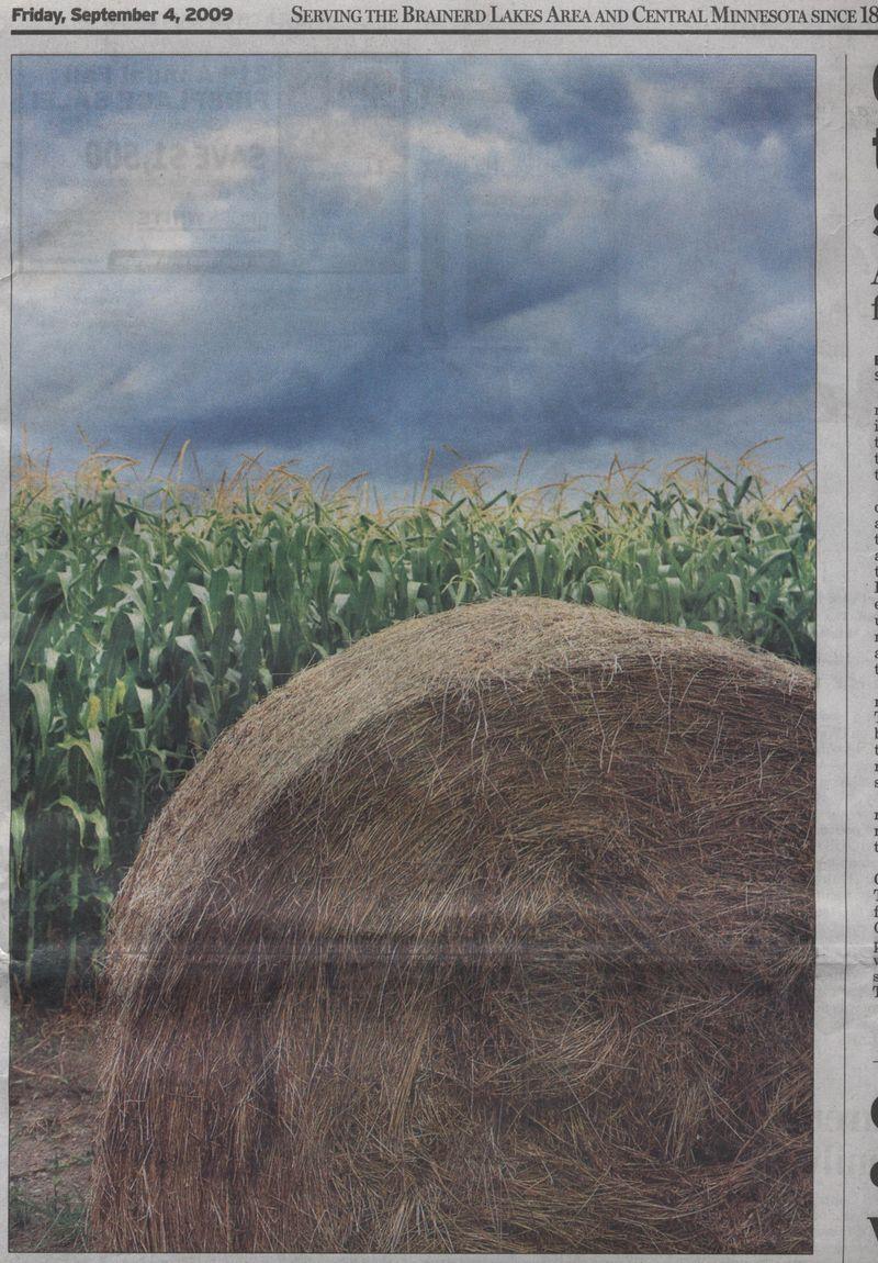 Corn hay field