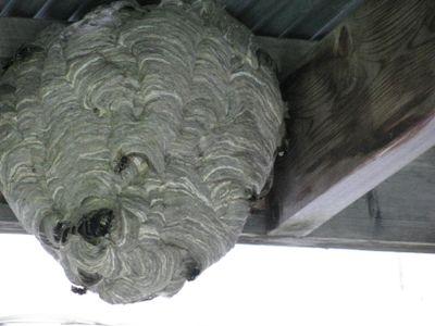 Beehive under porch