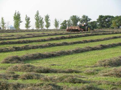 Hay baling near Pierz