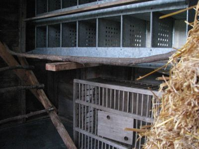Chicken coop fall cleaning