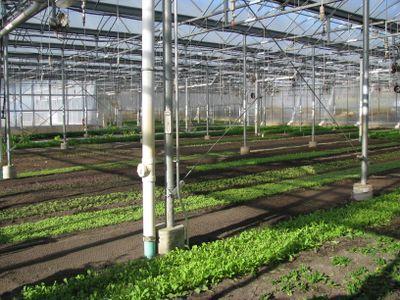 Stone barns farm greenhouse