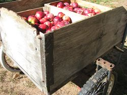 Apple cart north wind farm