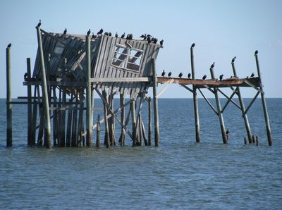 Pelicans in gulf