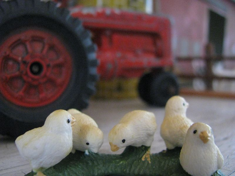 Five pecking chicks