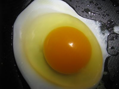 Deep orange yolk
