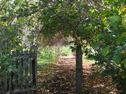 Serenbe garden path