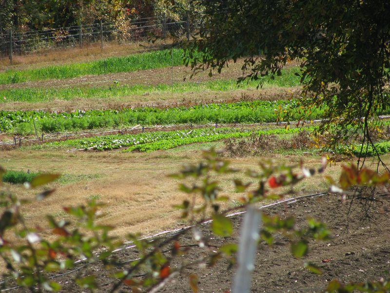 Serenbe organic farm