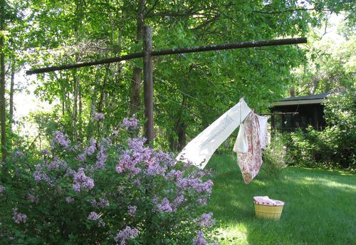 Copy of clothesline lilacs1