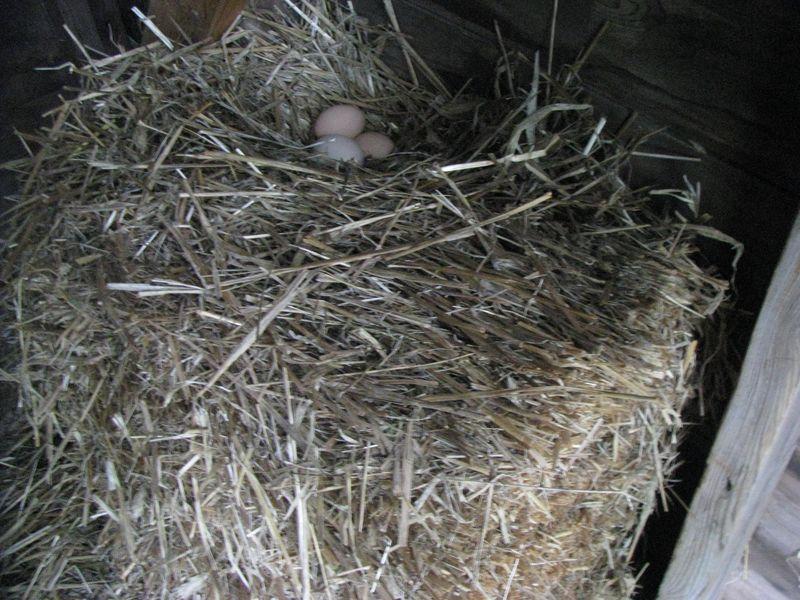 Straw bale nest