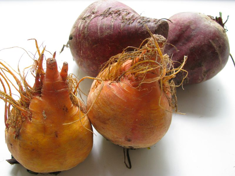 Raw red and golden beets