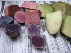 Seed potatoes cut