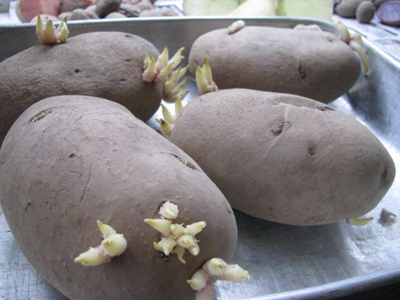 Cal-white potatoes