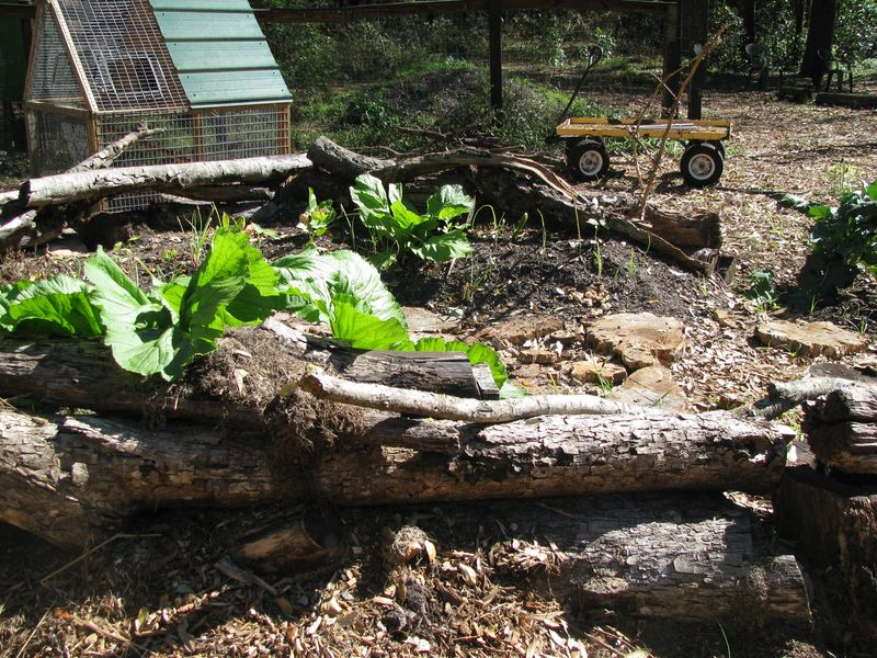 Learning gate stump branch enclosure
