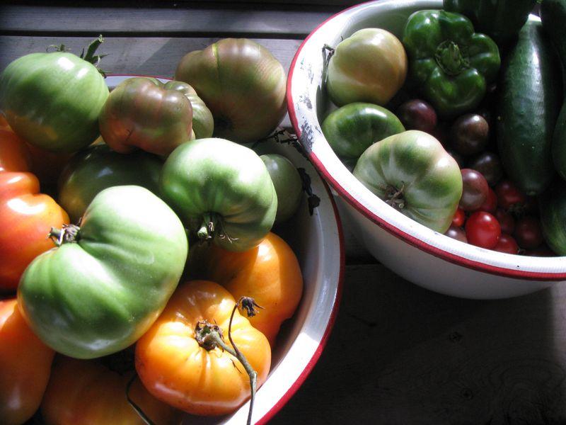 Prefrost harvest