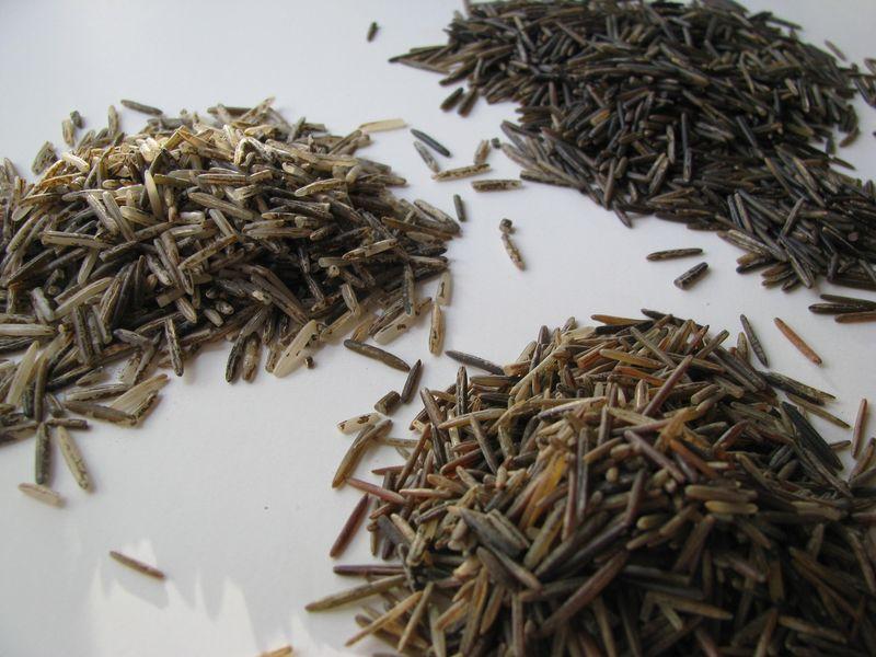 Wild rice varieties