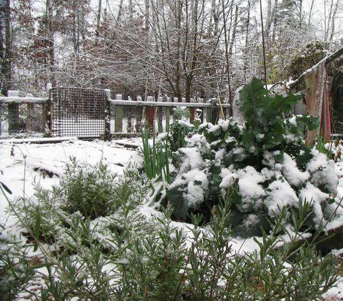 Snow on kale