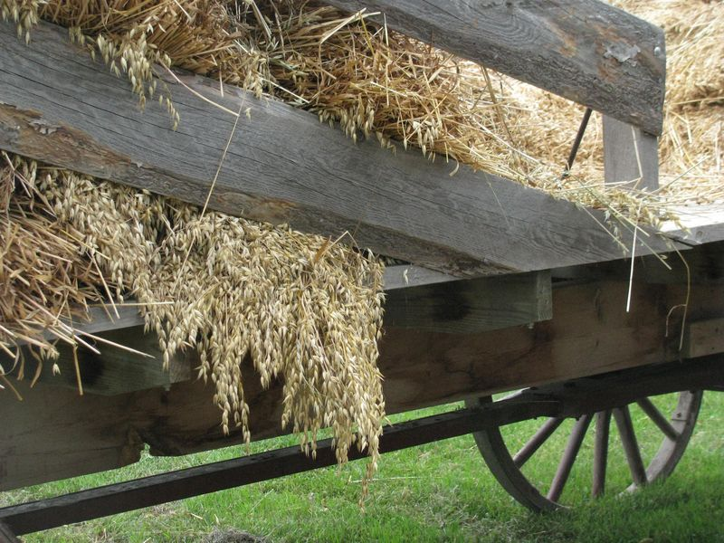 Wagon of oats