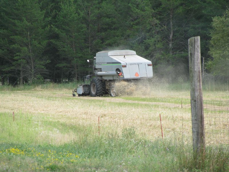 Triticale combining