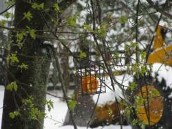 Snowy orange half