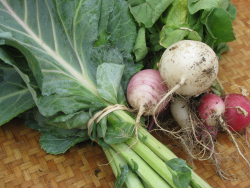 Sanford farmer's market collards + radishes