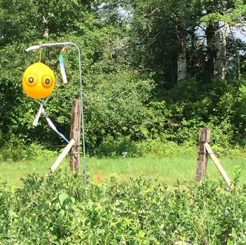 Balloon scarecrow