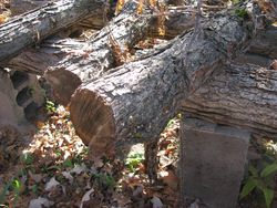 Log cutting and stacking