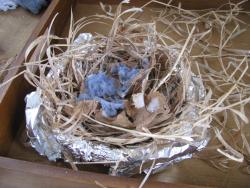 Bird nest layers