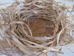 Dried grass + leaf bird nest