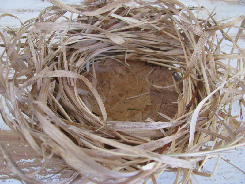 Dried grass + leaf bird nest