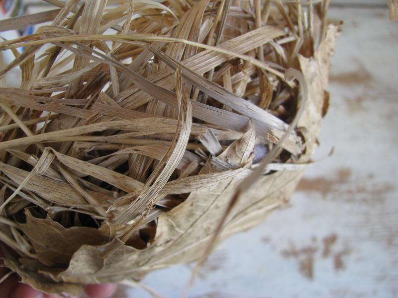 Bowl shaped nest