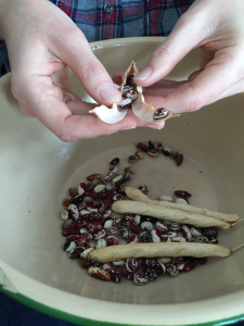 Shelling beans