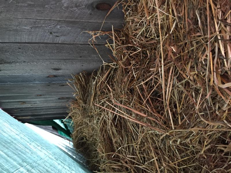 Straw rabbit home