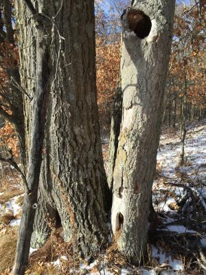 Tree animal homes