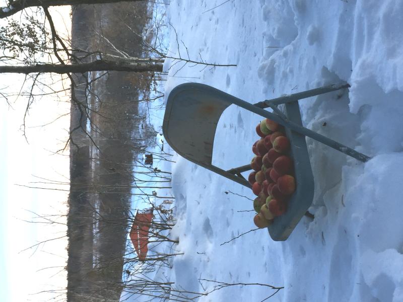 Deer apples